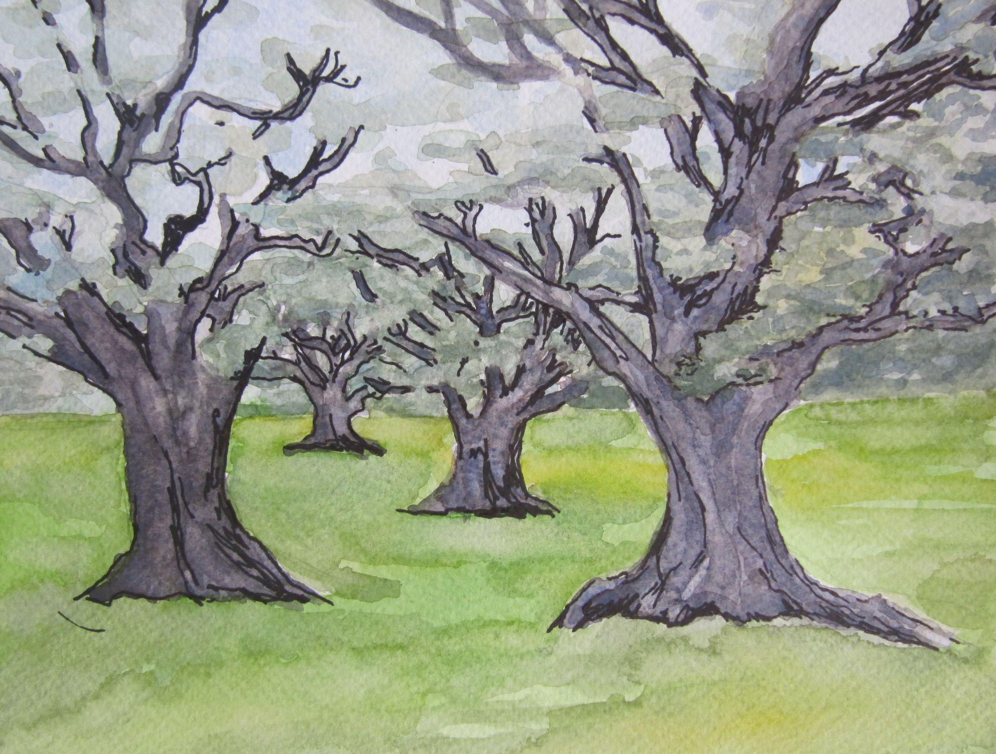 2013 olijfbomen I